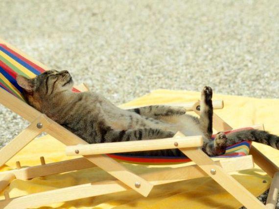 chat en vacances